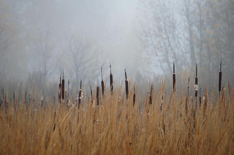 А дальше туман