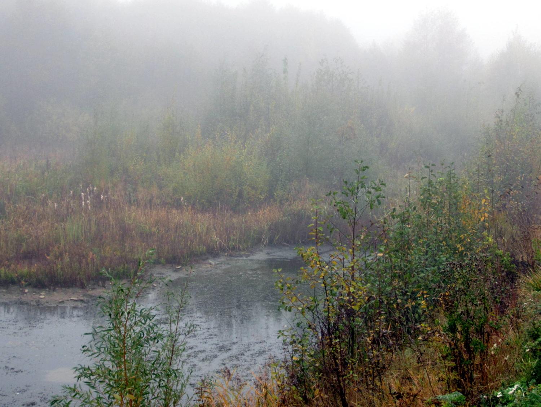Туман над болотом