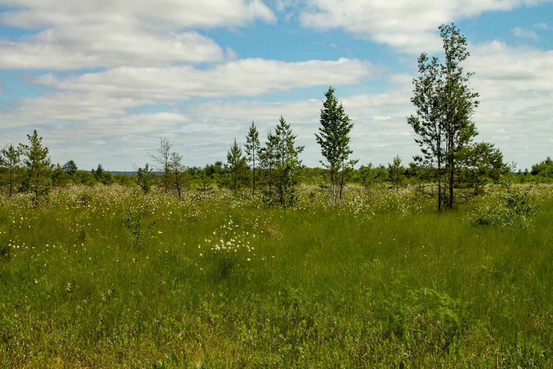 Цветущее болото.