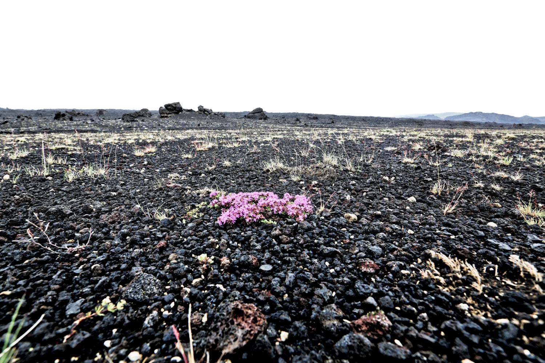 И на Марсе будут цветики цвести