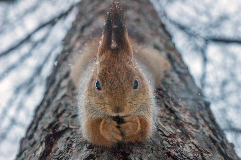 Свисая с дерева