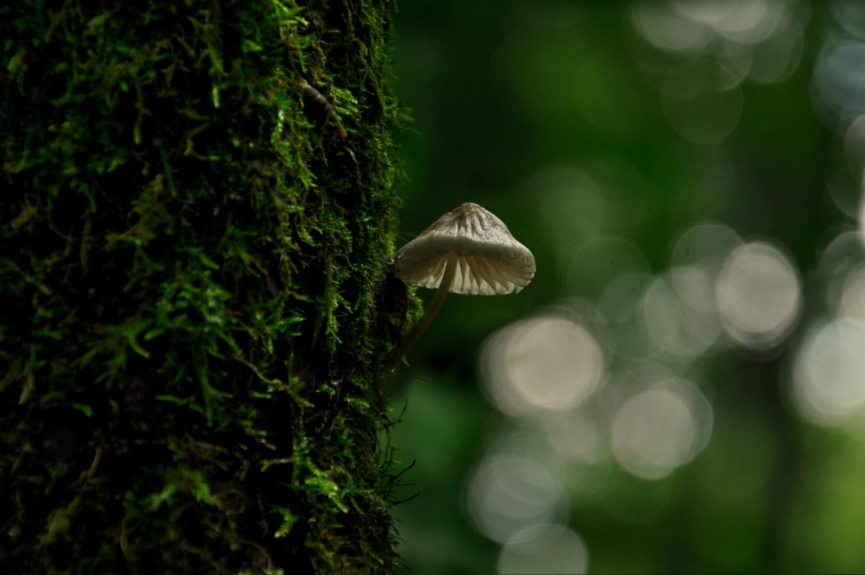 Во лесах заповедных для Бабы Яги