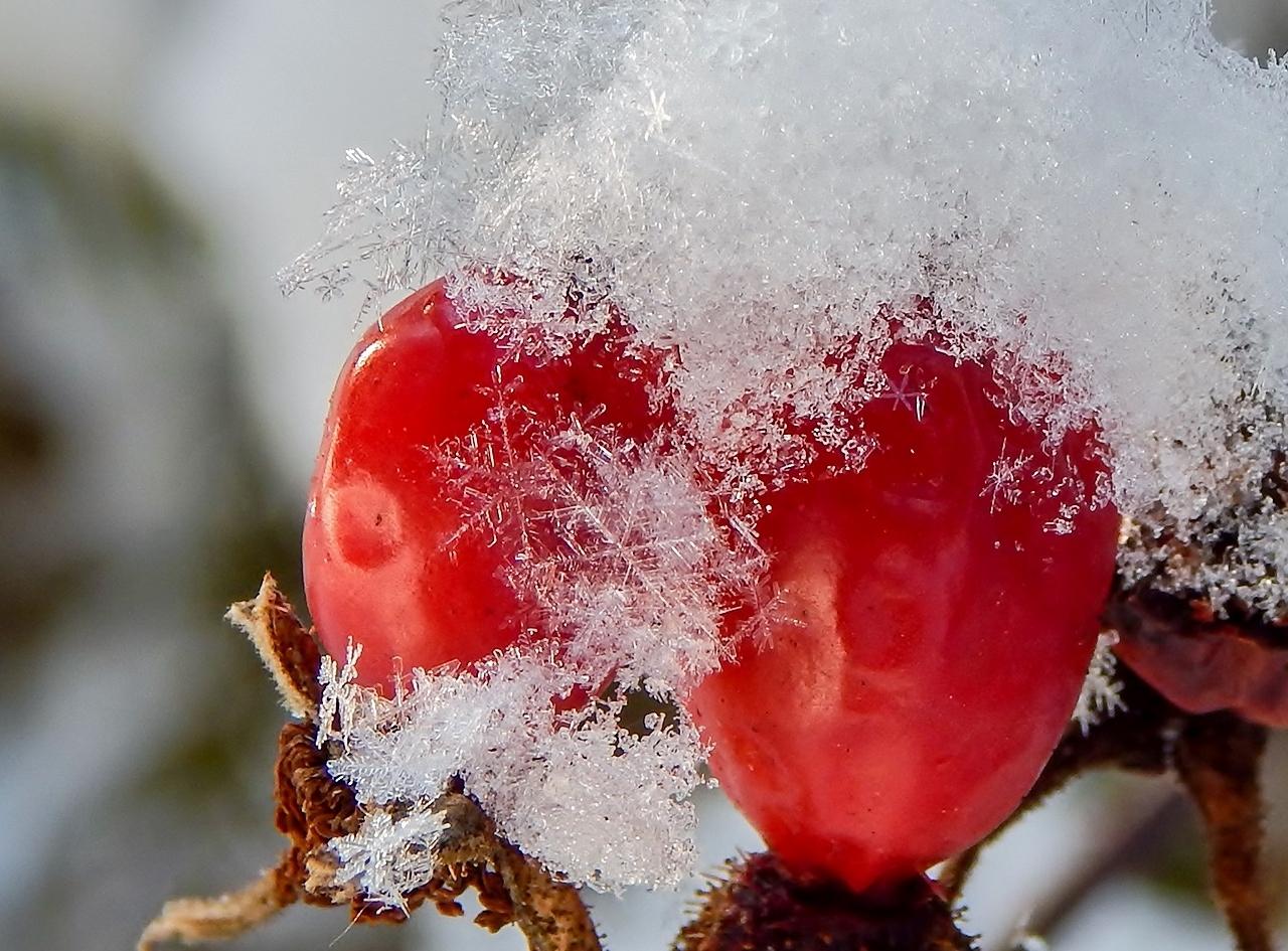 Снежинки на красном...