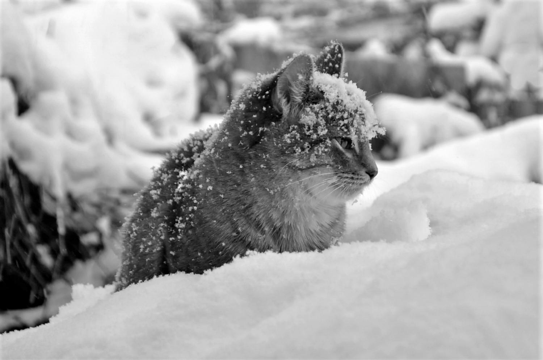 Раз снежинка, два снежинка- будет шапочка!,,)