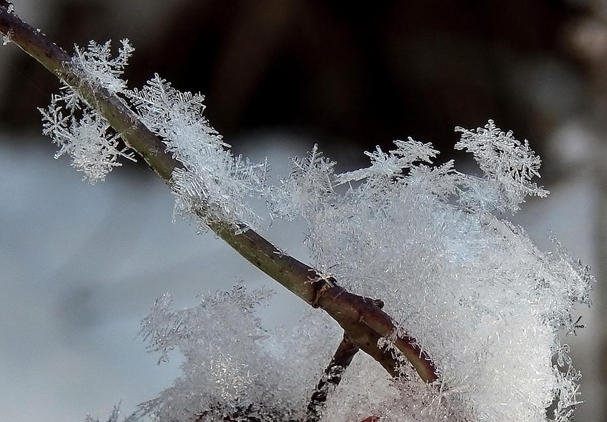 Пушистый снежок