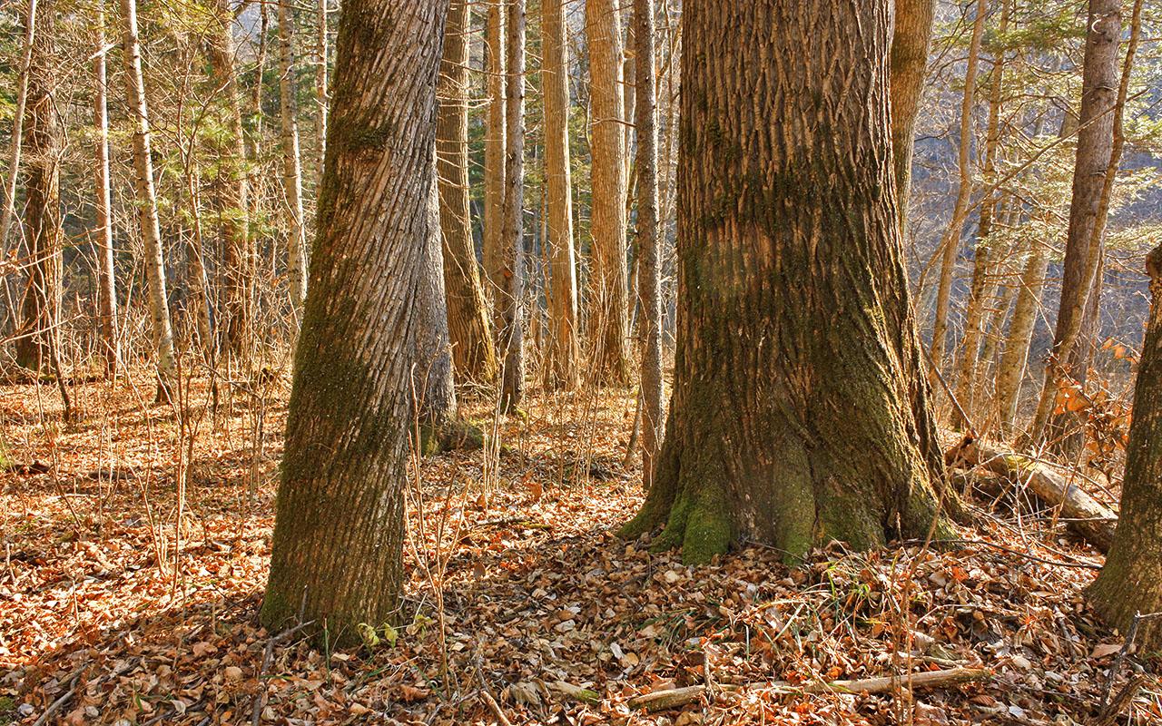 Жил был лес...
