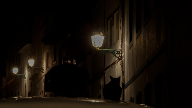 Ночью все кошки черные,