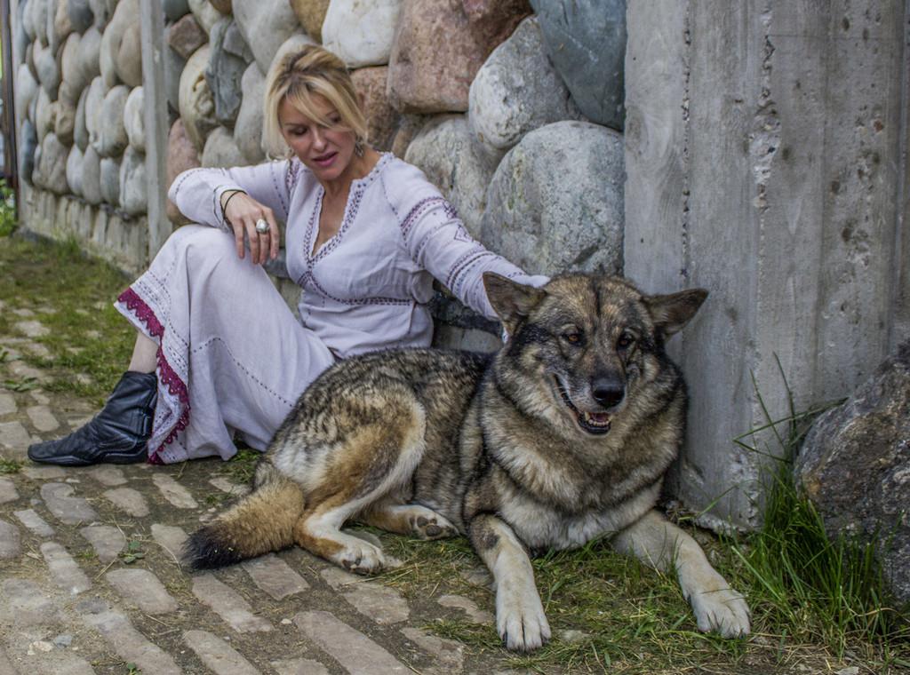 Нам не страшен серый волк