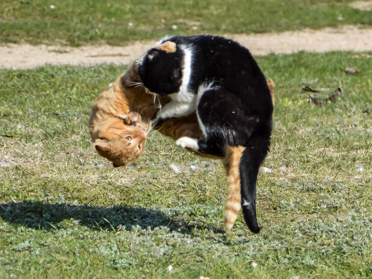 Сальто-мортале или котовасия