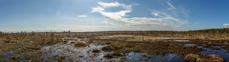 В краю болот