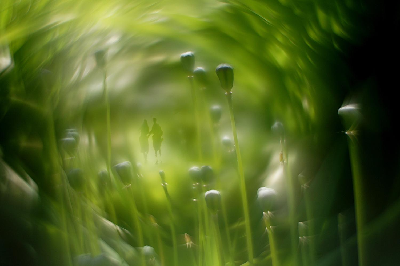Зелень колдовства
