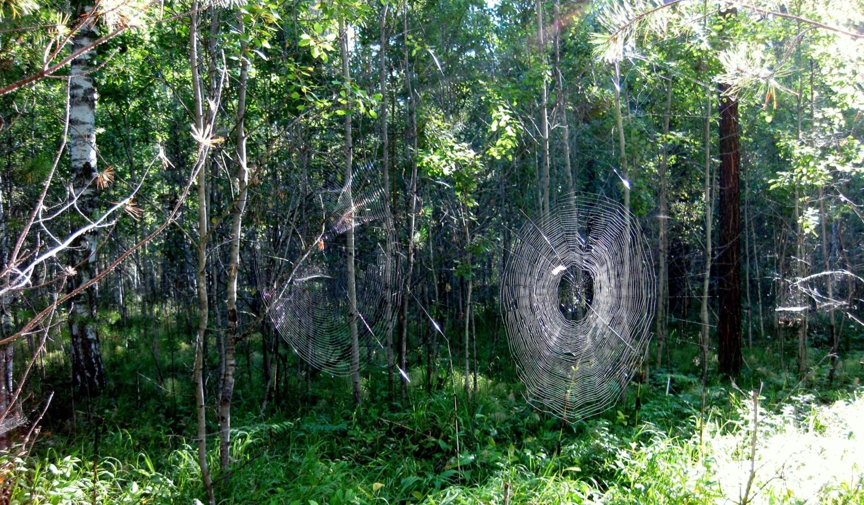 """Лесной """"тир"""" под названием """"Целься в десятку"""""""