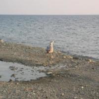 сентябрь 2005. г. Анапа
