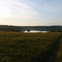 Конь у озера Петровское