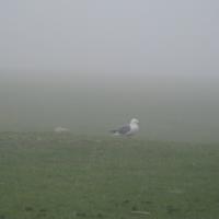 Мир в тумане