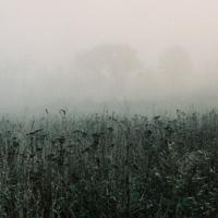 дождь и туман