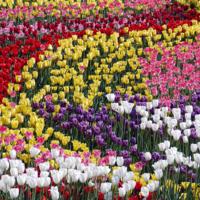 Цветы достойные восхищения