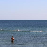 Заплыв морских котиков