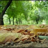 уж и осень наступила