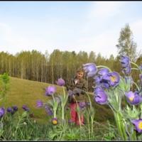 В стране гигантских цветов...