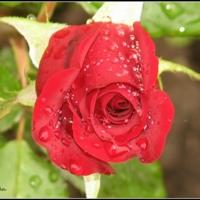 Красота создана природой...