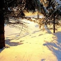 Кто отдыхал под елкой вечером ?