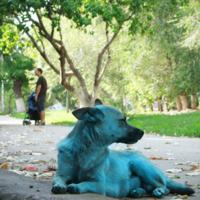 """""""Голубой щенок"""", не пейзаж"""