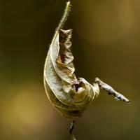 Летучий голандец