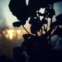 Любовь за окном