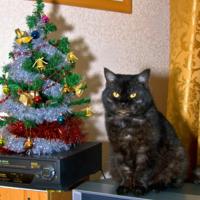 Котофото Новогоднее