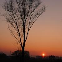 Одиноко как солнце