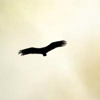 С высоты птичьего полета)))