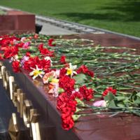 Красная гвоздика - наш цветок