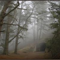 Утро, туман...