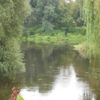 Лес через озеро