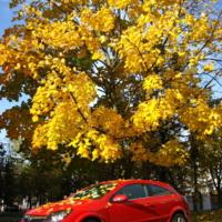 Желто-красное настроение