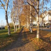 Осень в Архангельске
