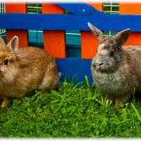 братья кролики