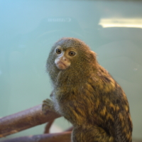 monkey is behind the glass