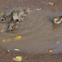 Осенние купания