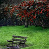 Под сенью красных ягод