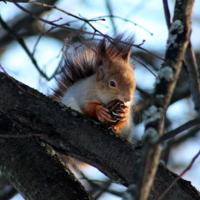 Завтрак на дереве