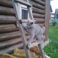 Кот у окна...