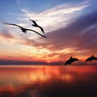 Мир, где царит Любовь и Гармония