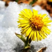 Стань - Первым цветком года!