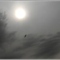 Одинокий полёт