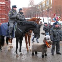 Командирский конь