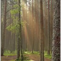 Хорошо в лесу...
