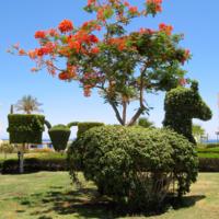 Лошадка под деревом