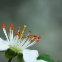 Последний цветочек остался...